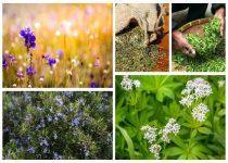 plantas-medicinales-y-para-que-sirven-min-1
